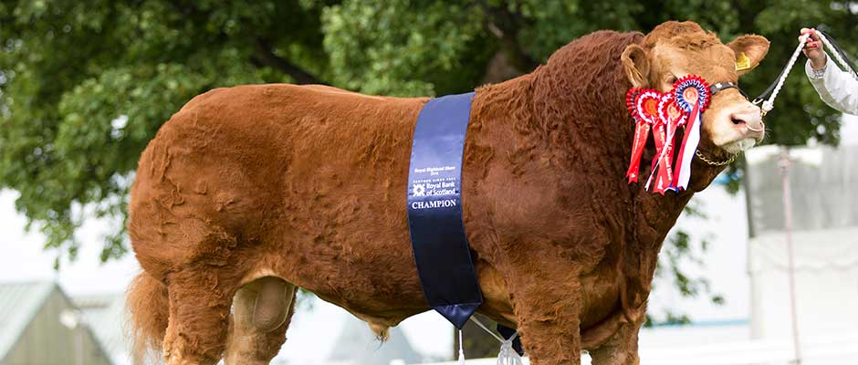 Highland Show Champion
