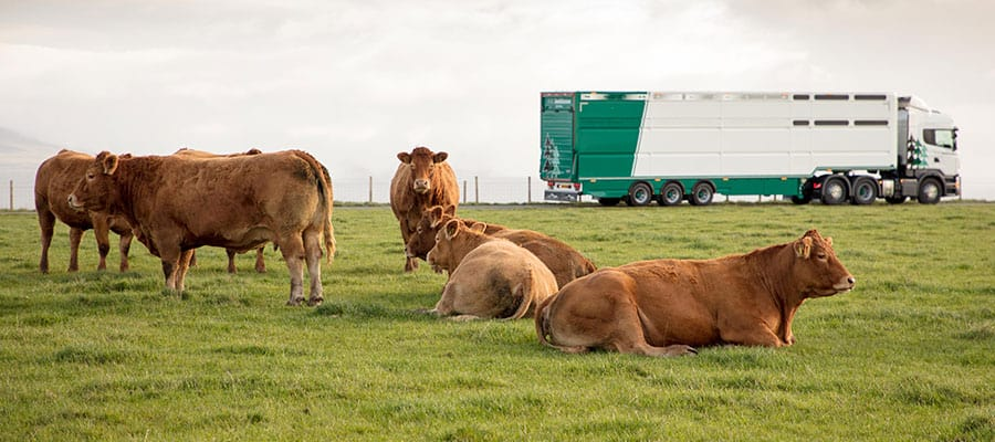 Limousin AWJ Cattle Trailer